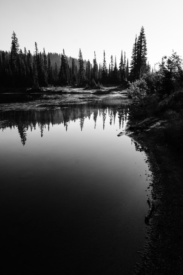 Trees reflected off the waters of the Reflection Lakes at Mount Rainier National Park, with fog hanging off the surface.