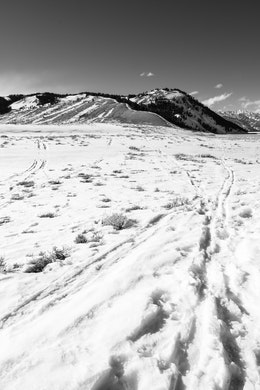 Tracks on the snow near the Gros Ventre Road, with Blacktail Butte in the background.