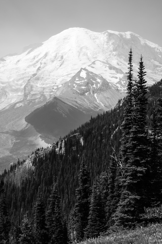 Mount Rainier, seen from the Sunrise Rim Trail, with forests in the foreground.