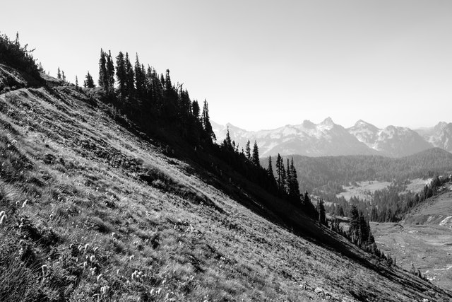 A line of trees seen from the switchbacks of the Golden Gate Trail in Mount Rainier National Park.