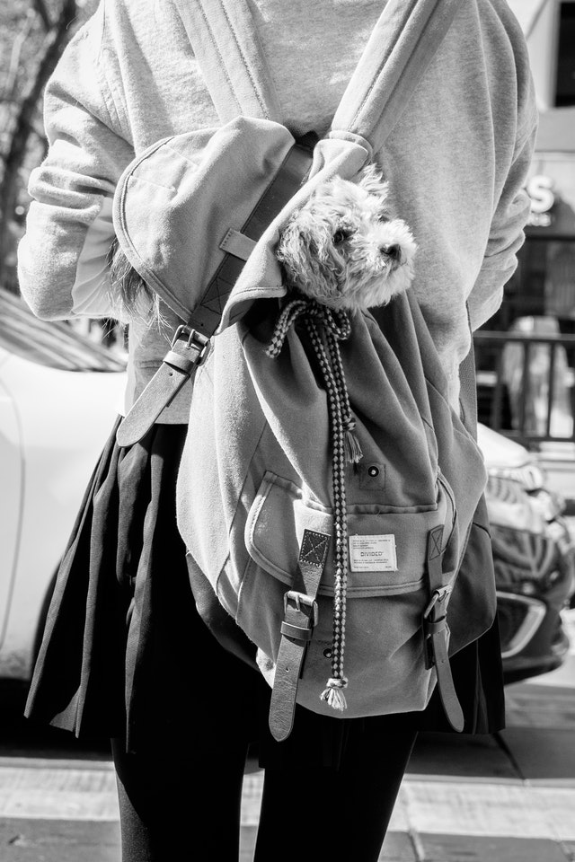 A girl carrying a cute dog in a backpack on Market Street, San Francisco.