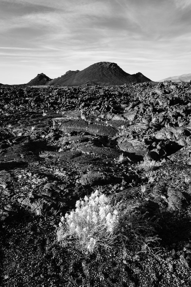 A field of pahoehoe and ʻaʻa lava. In the foreground, a shrub growing in the cinder, and in the background, a spatter cone.