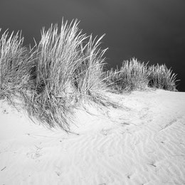 Close-up of dune grass on a sand dune on a stormy day.