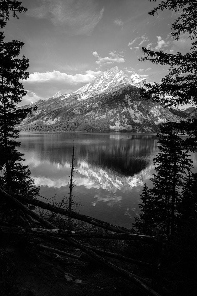 Grand Teton, seen from an overlook at Jenny Lake, with some trees and a wooden fence in the foreground.