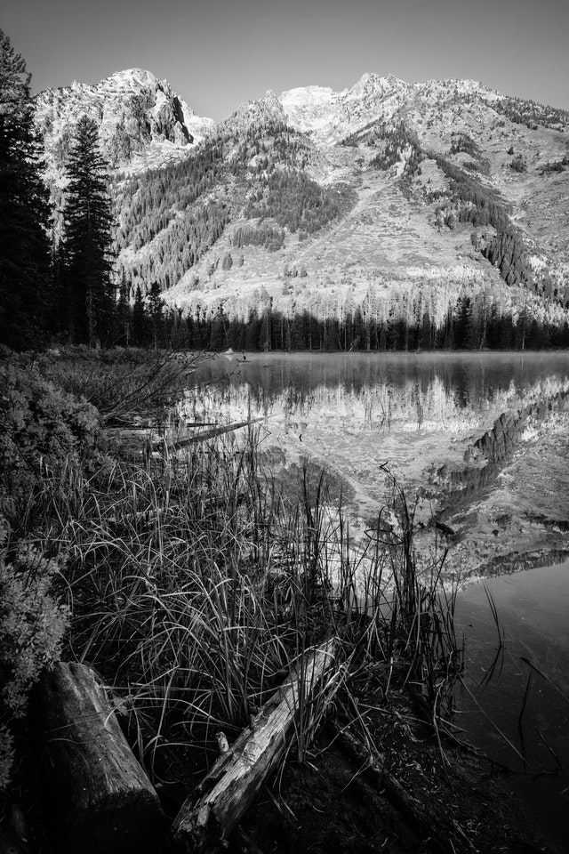 Logs and grasses on the shore of String Lake. In the background, the Teton range, reflected on the surface of the lake.
