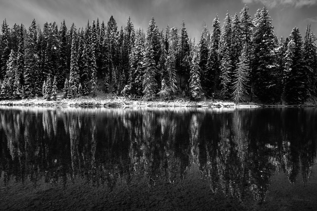 Snow-covered pine trees reflected off the surface of the Snake River at Pacific Creek Landing.