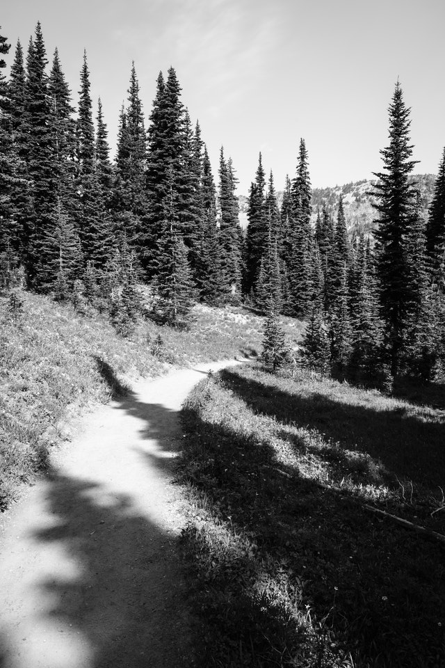 The Wonderland Trail covered in tree shadows, at Mount Rainier National Park.