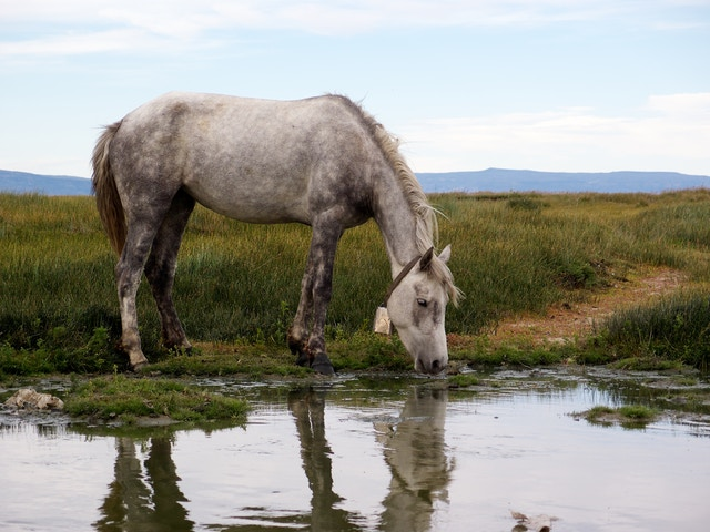A horse with a bell, in El Calafate, Argentina.