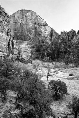 The valley floor of Zion. Trees can be seen in the foreground, and the canyon walls in the background.