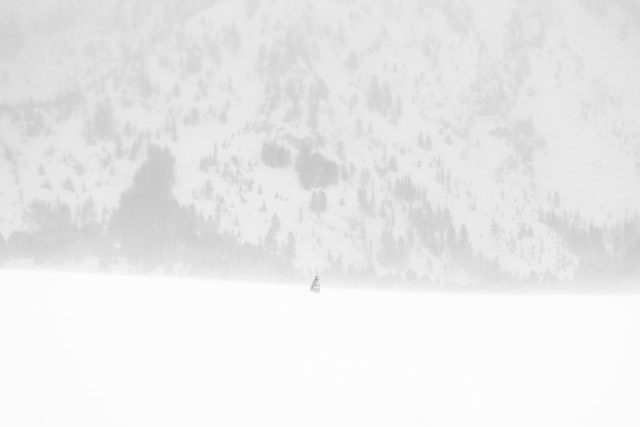 A coyote sitting in blowing snow at the top of a hill during a snowstorm, with the Teton range in the background.
