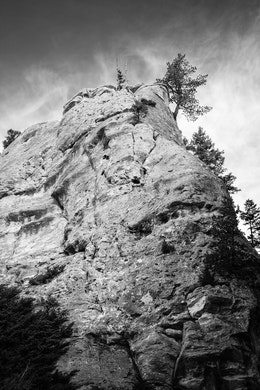 A small tree growing at the top of a massive hoodoo in Yellowstone.