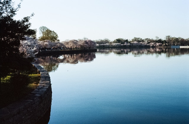 The Tidal Basin, during the Cherry Blossom Festival.
