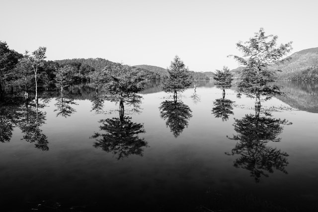 Trees reflected in the waters of Lake Ocoee in Tennessee.