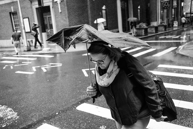 A woman carrying an umbrella, crossing William Street in the rain.