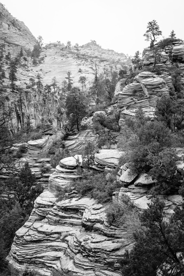 Trees and a sandstone rock formation near the Zion-Mount Carmel Highway.