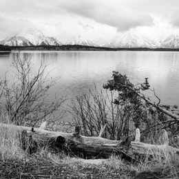 A log covered in snow, with Jackson Lake and the Tetons in the background.