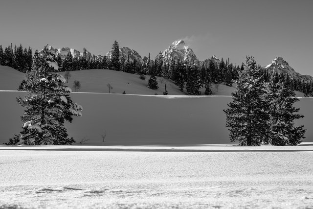 The Grand, seen behind a line of trees at the top of a snow-covered ridge. In the foreground, three snow-covered pine trees.