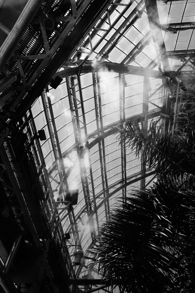 Looking up at the United States Botanic Garden, as the environmental control releases mist into the rainforest.