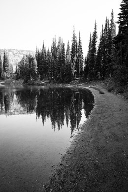 A group of trees reflected on the surface of Shadow Lake along its shore, in Mount Rainier National Park.