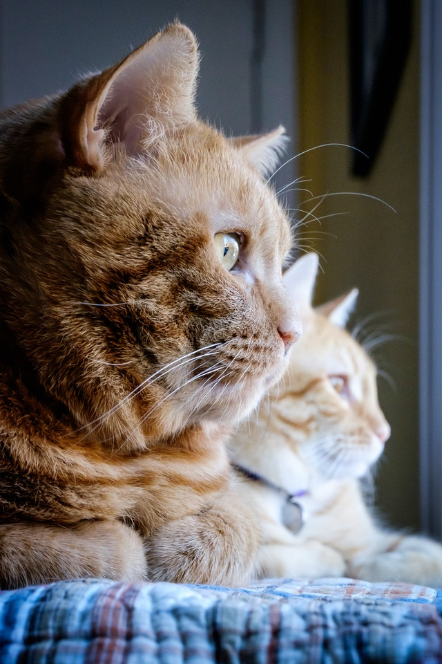 Rusty & Gus, looking out the window.