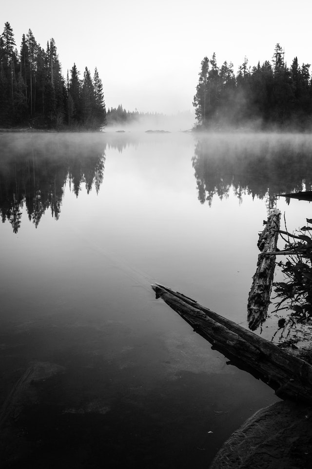 Two logs near the shore of String Lake, which is covered in mist at dawn. In the background, trees are partially obscured by the mist.