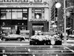 Snow on Park Avenue.