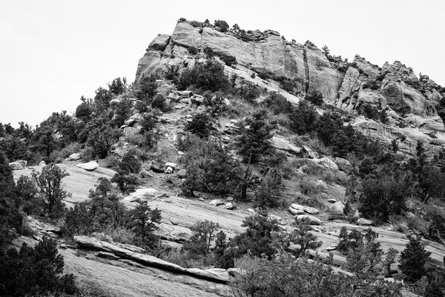 A rocky butte covered in trees and vegetation on the side of the road in Kolob Canyons.