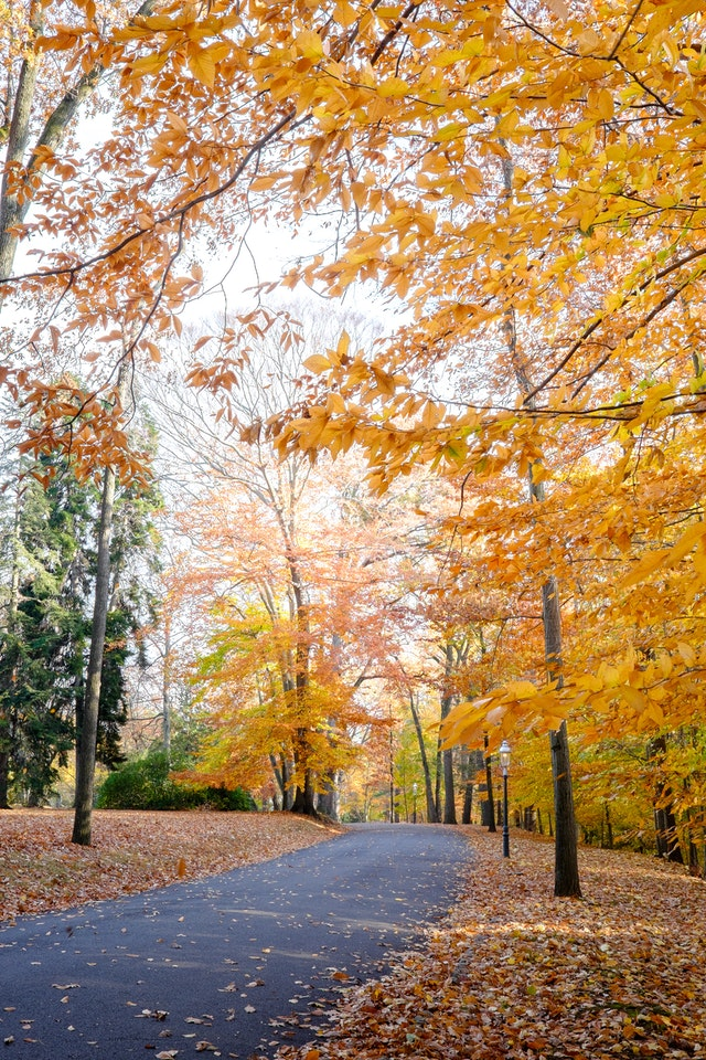 Trees in full fall colors in Glenmont.