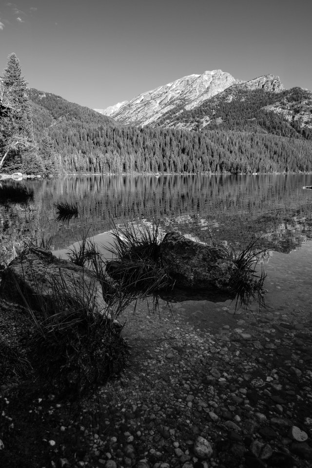 The shore of Phelps Lake in Grand Teton National Park. In the foreground, grass and rocks in the water.
