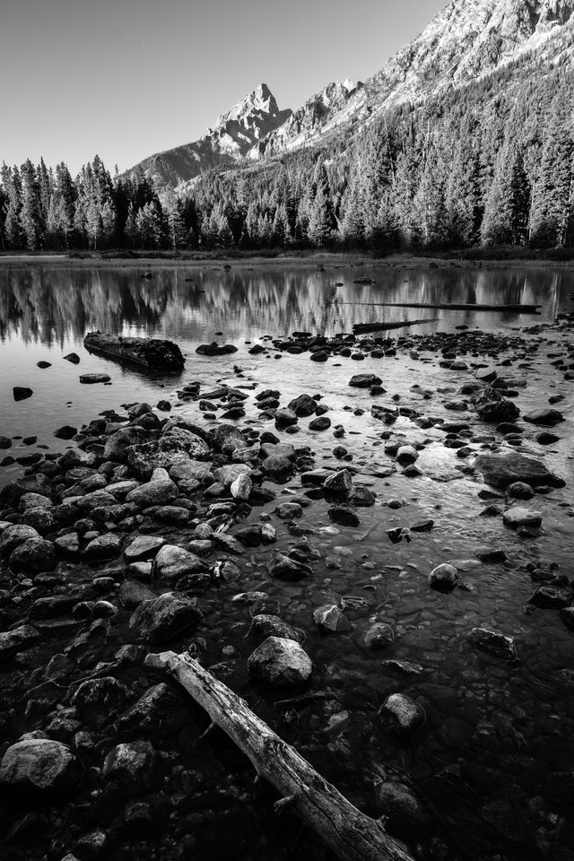 Rocks and logs in String Lake. In the background, Teewinot Mountain, behind a line of trees.