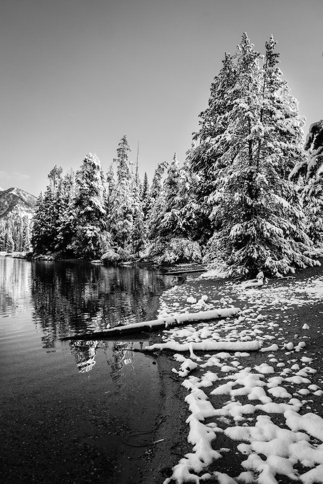 Snow-covered trees along the shore of String Lake.