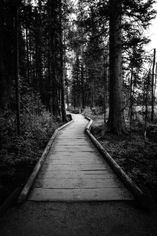A wooden bridge zigzagging through the woods along the Leigh Lake Trail.