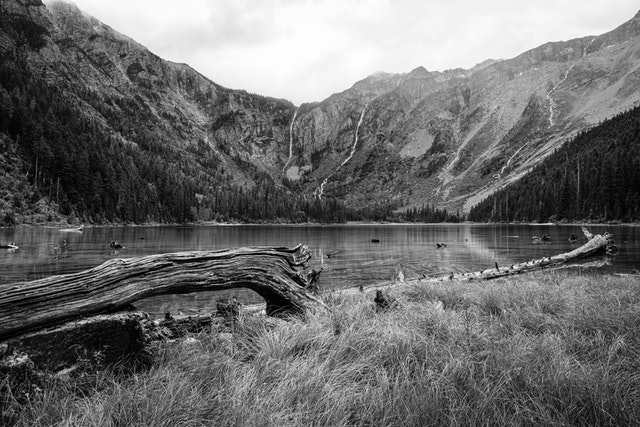 Avalanche Lake. In the background, waterfalls running down the sides of the mountain. In the foreground, a fallen tree can be seen near the shore of the lake, which is covered in grass.