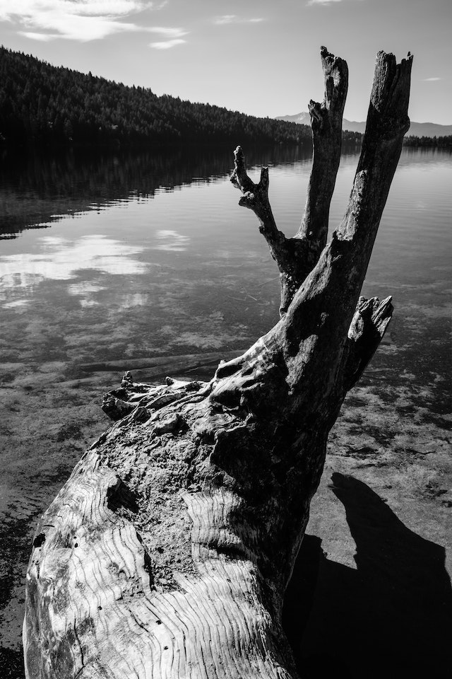A log on the shore of Phelps Lake.