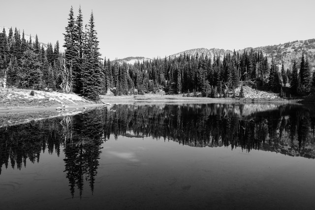 Trees reflected in the surface of Shadow Lake in Mount Rainier National Park.