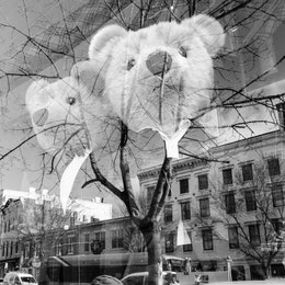 A person reflected on the front window of a Ralph Lauren store, with two well-dressed bears in it.