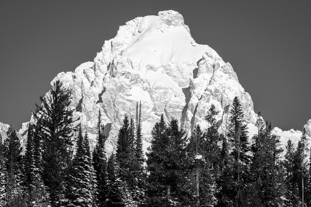 Grand Teton in the winter, seen behind a line of snow-covered pine trees.