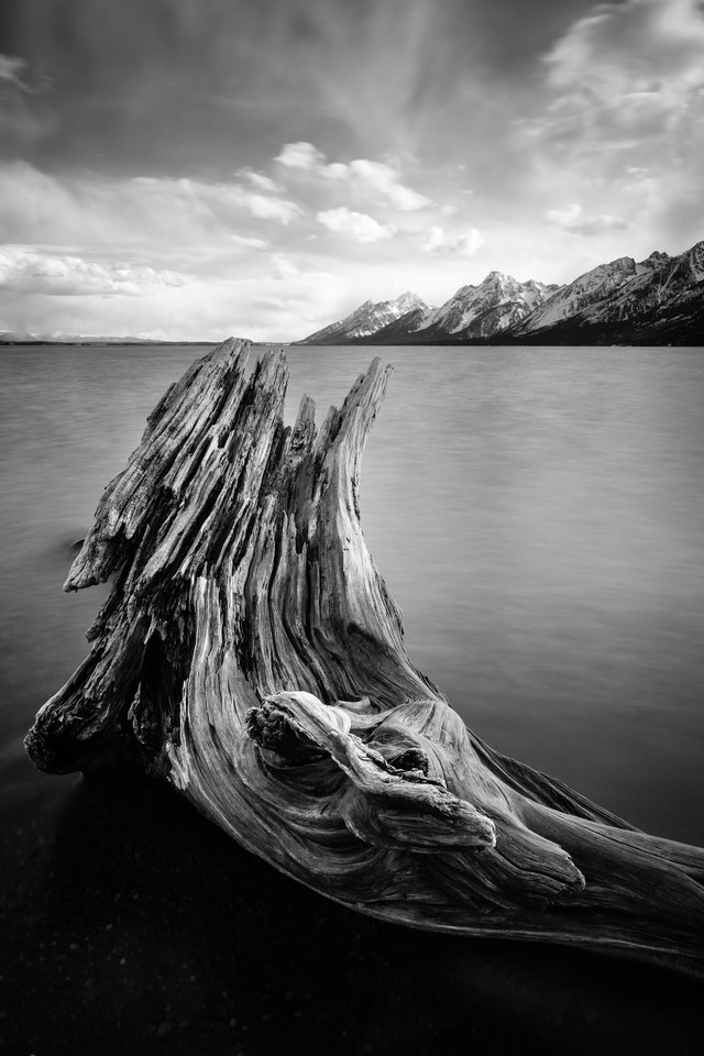 A long exposure photograph of a large, curved piece of driftwood on the shore of Jackson Lake, pointed towards the Tetons.