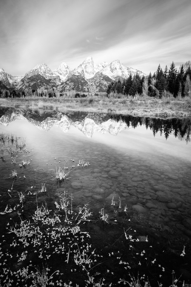 The Teton Range, seen from Schwabacher Landing. In the foreground, frozen plants at the bank of the Snake River.