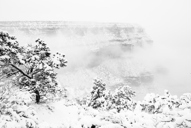A view of the South Rim from Grand Canyon Village during a snowstorm. In the foreground, snow-covered trees on the rim; in the background, Maricopa Point shrouded in fog.