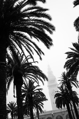 The tower of the Ferry Building in San Francisco, shrouded in fog and seen between palm trees.