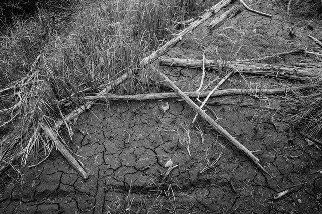 Grass, fallen branches, and dry, cracked mud just off the water near String Lake.