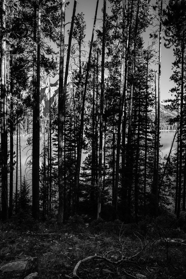 Mount Moran and Leigh Lake, obscured by trees on the shore of Leigh Lake.
