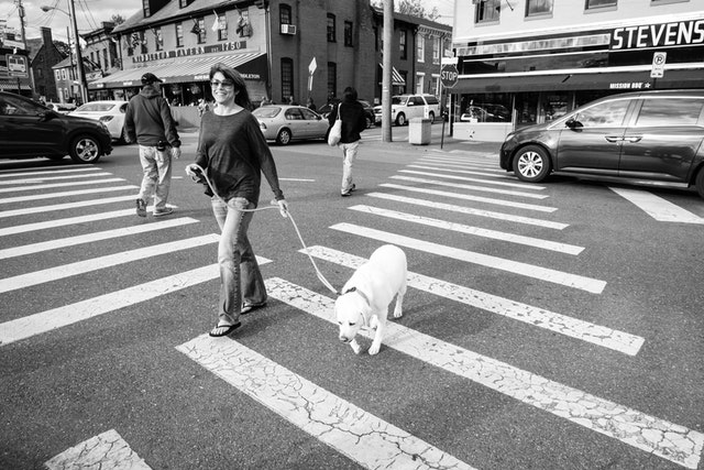 A woman walking her dog through a crosswalk in Annapolis, Maryland.
