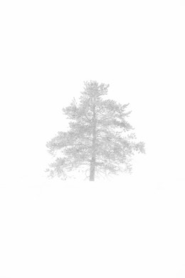 A tree during a snowstorm.