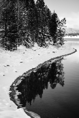 Snow and trees alongside the shore of Jackson Lake, Grand Teton National Park.