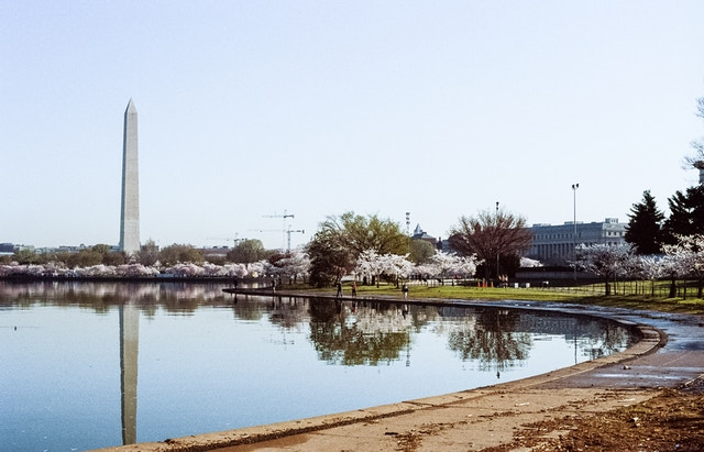 The Tidal Basin during the Cherry Blossom Festival.