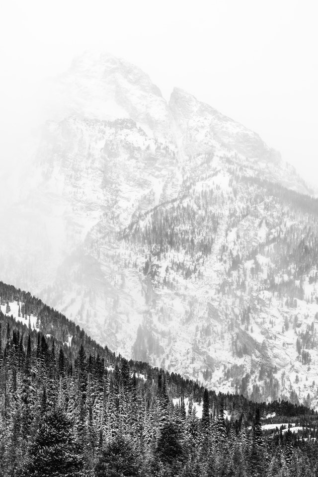 Nez Perce Peak, partially obscured by snow, behind a line of trees.