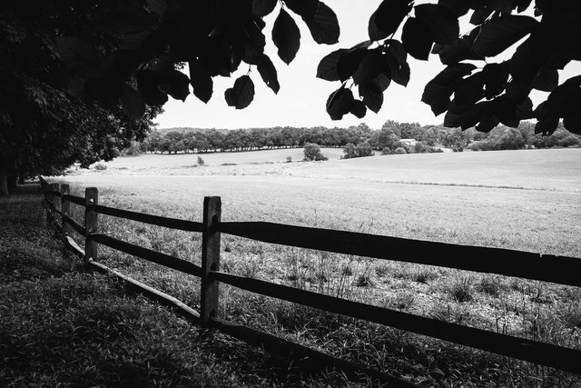 A field at the Thomas Farm in Monocacy National Battlefield.