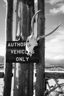 "An antelope skull hanging from an ""authorized vehicles only"" sign at the gate of a ranch in Grand Teton National Park."